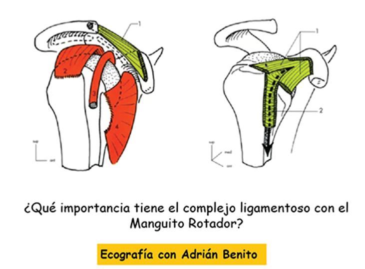 que-importancia-tiene-el-complejo-ligamentoso-con-el-manguito-rotador